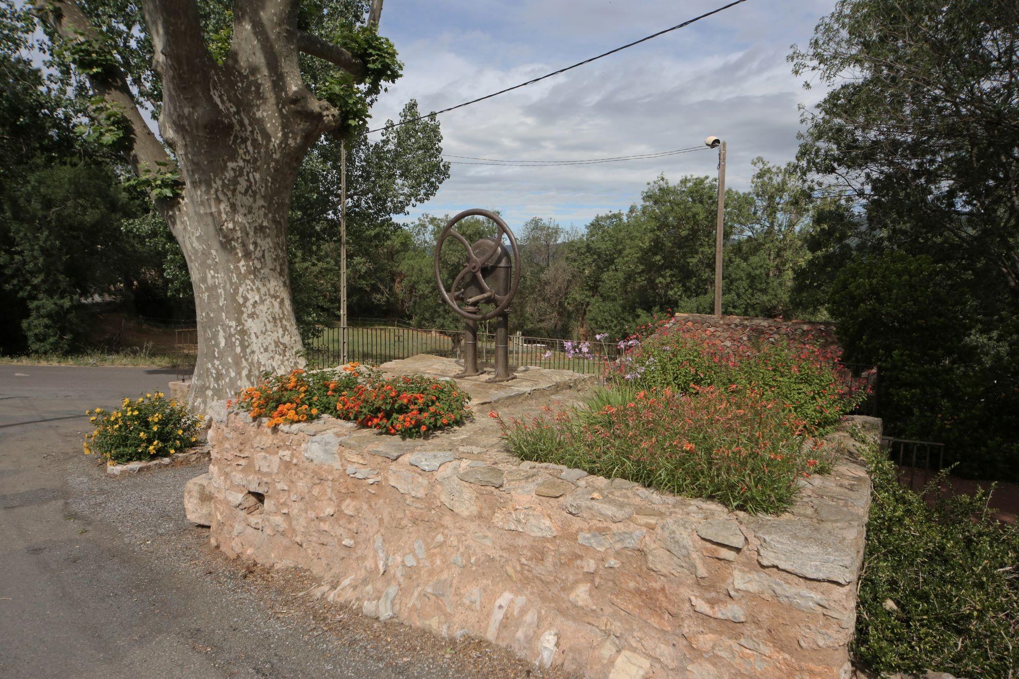 le platane du square de la fontaine